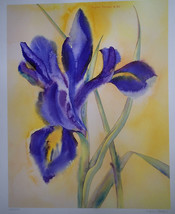 Lynn Toneri Dutch Iris Print #27/500 Dated 1985 Very Nice! Retails $45 - $19.99