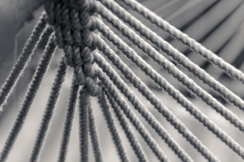 Hammock  web