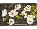 Vintage linen postcard magnolia state flower of louisiana la thumb155 crop