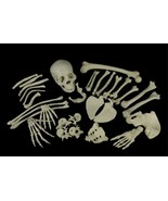 Life Size BUCKY SKELETON SKULL BONES Halloween Decoration Prop Building-... - $74.22