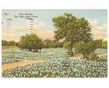 Vintage linen postcard bluebonnets texas state flower tx thumb155 crop