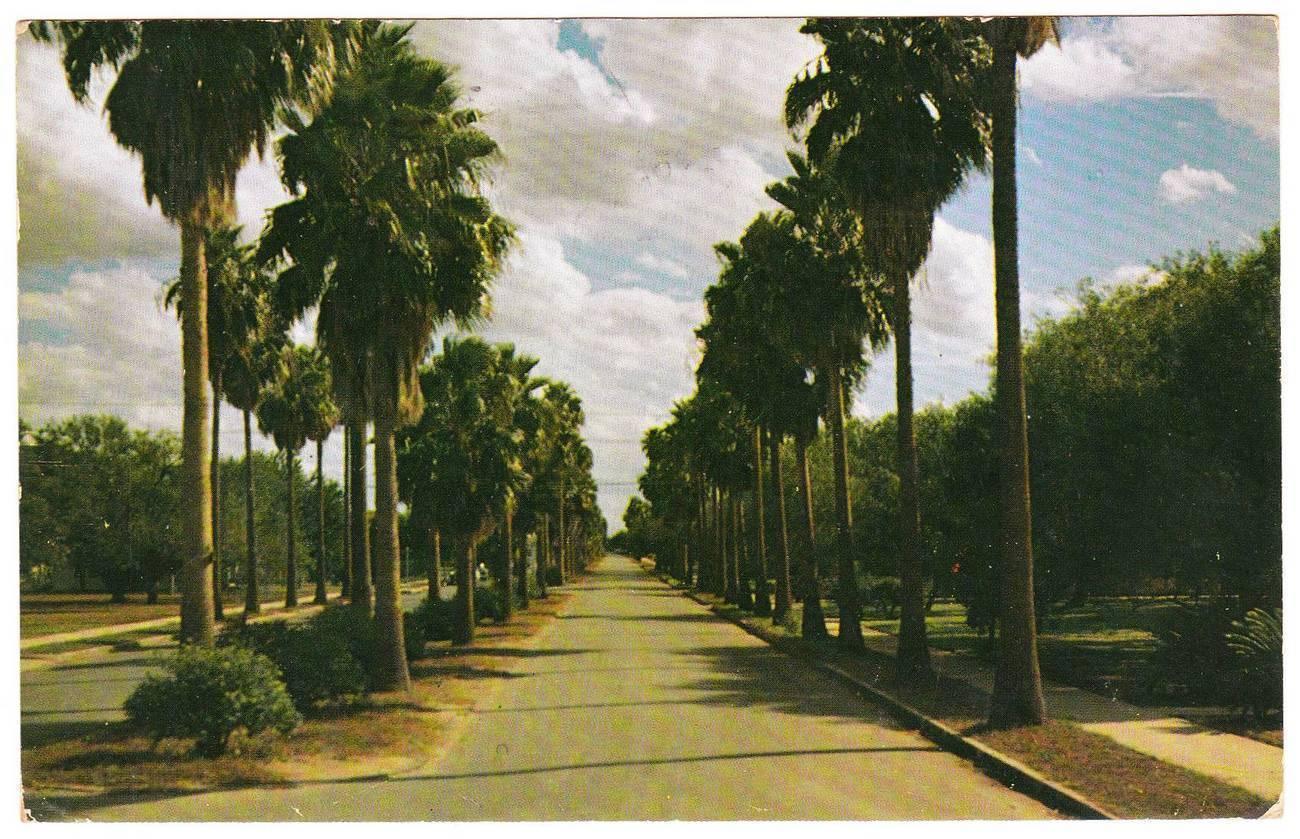 Vintage postcard palm trees south texas tx