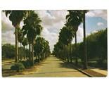 Vintage postcard palm trees south texas tx thumb155 crop