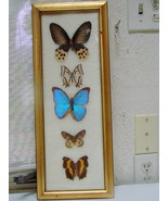 VTG REAL FRAMED BUTTERFLIES BUTTERFLY Insect SPECIMEN WALL HANGING ART taxidermy - $99.00