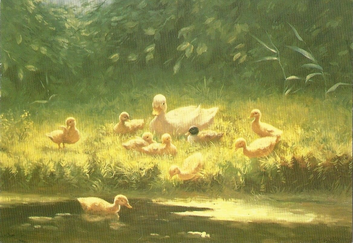 Postcard Ducklings By The River's Edge by Constant Artz New