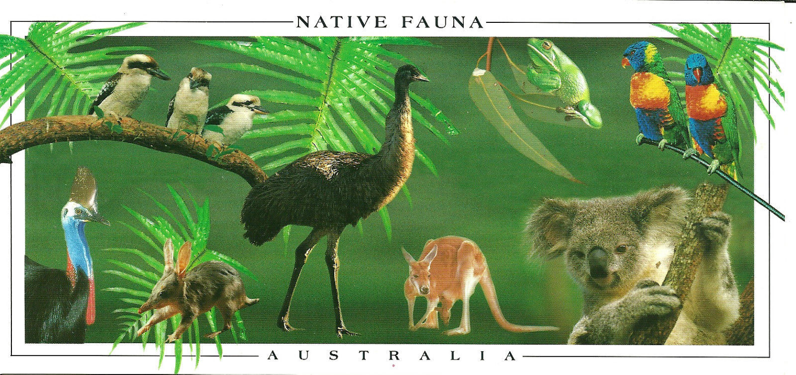 Postcard Native Fauna Of Australia Wildlife
