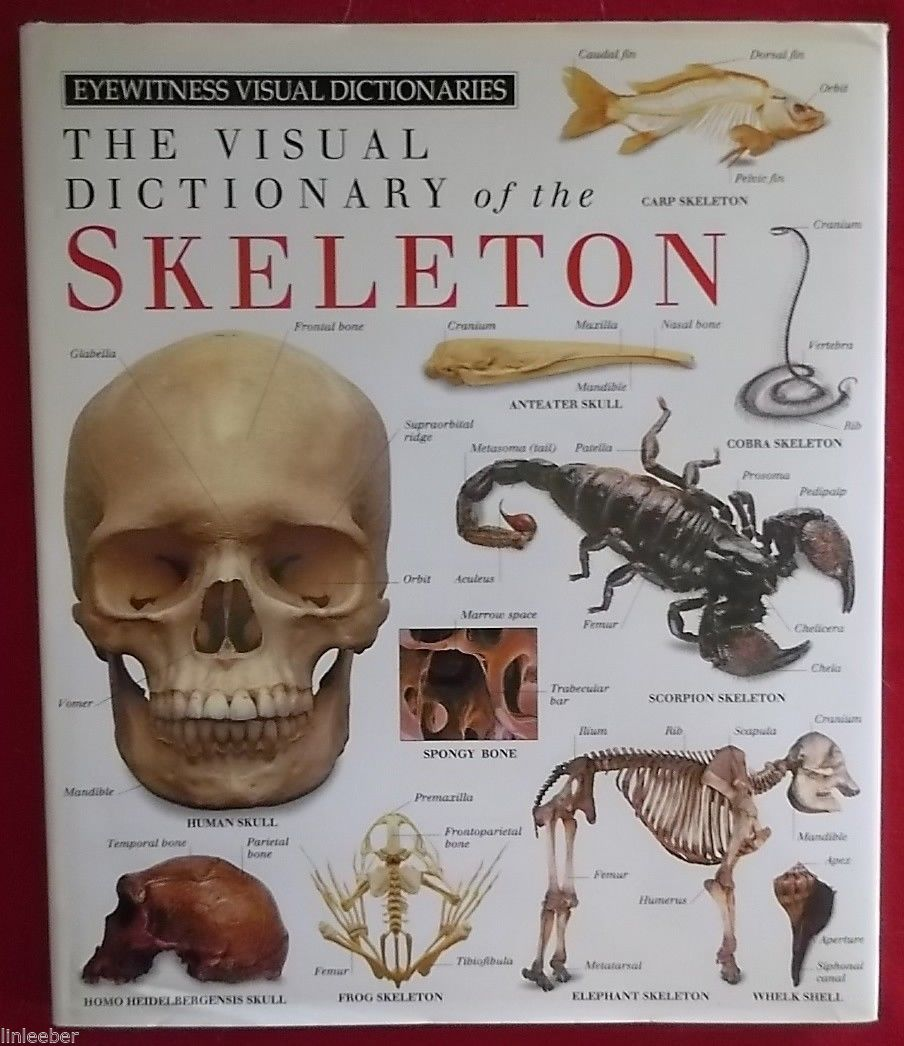 The Visual Dictionary of the Skeleton by Dorling Kindersley Publishing Staff;HCD