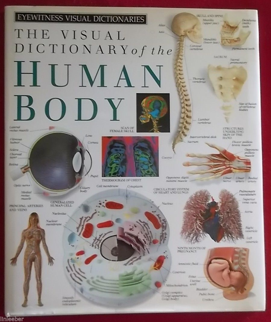The Visual Dictionary of the Human Body by Dorling Kindersley Publishing;HCDJ