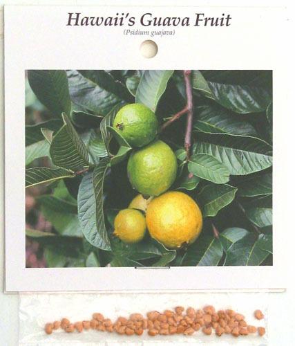 10 PK HAWAIIAN GUAVA FRUIT SEEDS ~ GROW HAWAII