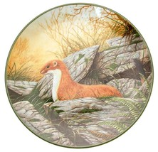 c1988 Royal Doulton A Stoat on the Alert Rollinsons Portraits of Nature TN196 - $35.87