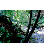 Cook Forest Creek, Photo Based Digital Art sized, 11x14, tre - $30.00