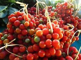 50 seed Tomato Red Cherry Tomatoes Lycopersicum Esculentum Vegetable - $3.99