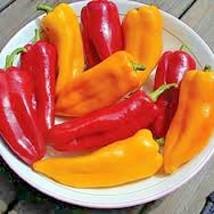100+CUBANELLE SWEET PEPPER Seeds Non-GMO Organic Heirloom Garden/Patio C... - $2.50