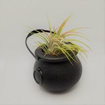 "Airplant in Black Cauldron, Halloween 2"" plastic planter, Witch pot air plant image 4"