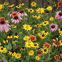 24,000 seeds - Midwest Wildflower Mix - $18.96