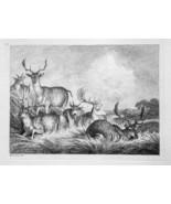 1801 ORIGINAL ETCHING Print by Howitt - Deer Family Resting Hiding in Hi... - $20.92
