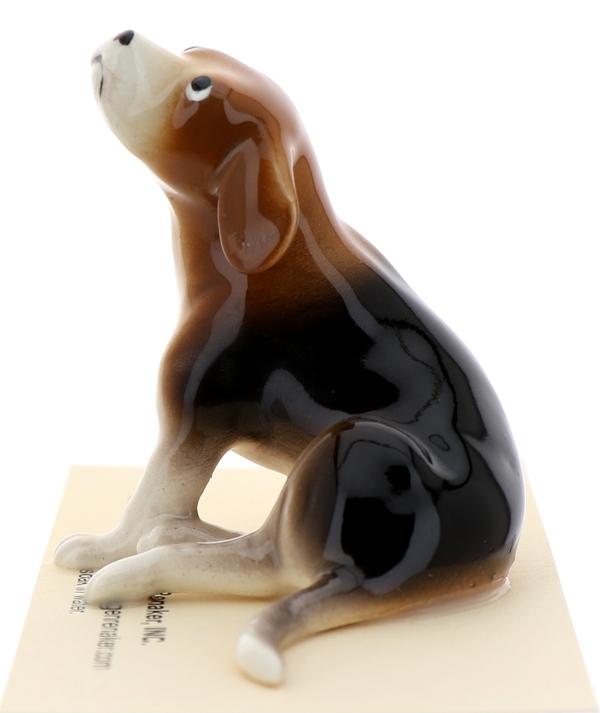 Beagle pedigree6