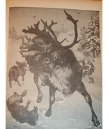 1899 Print of Reindeer Pursued by Wolves - $3.50