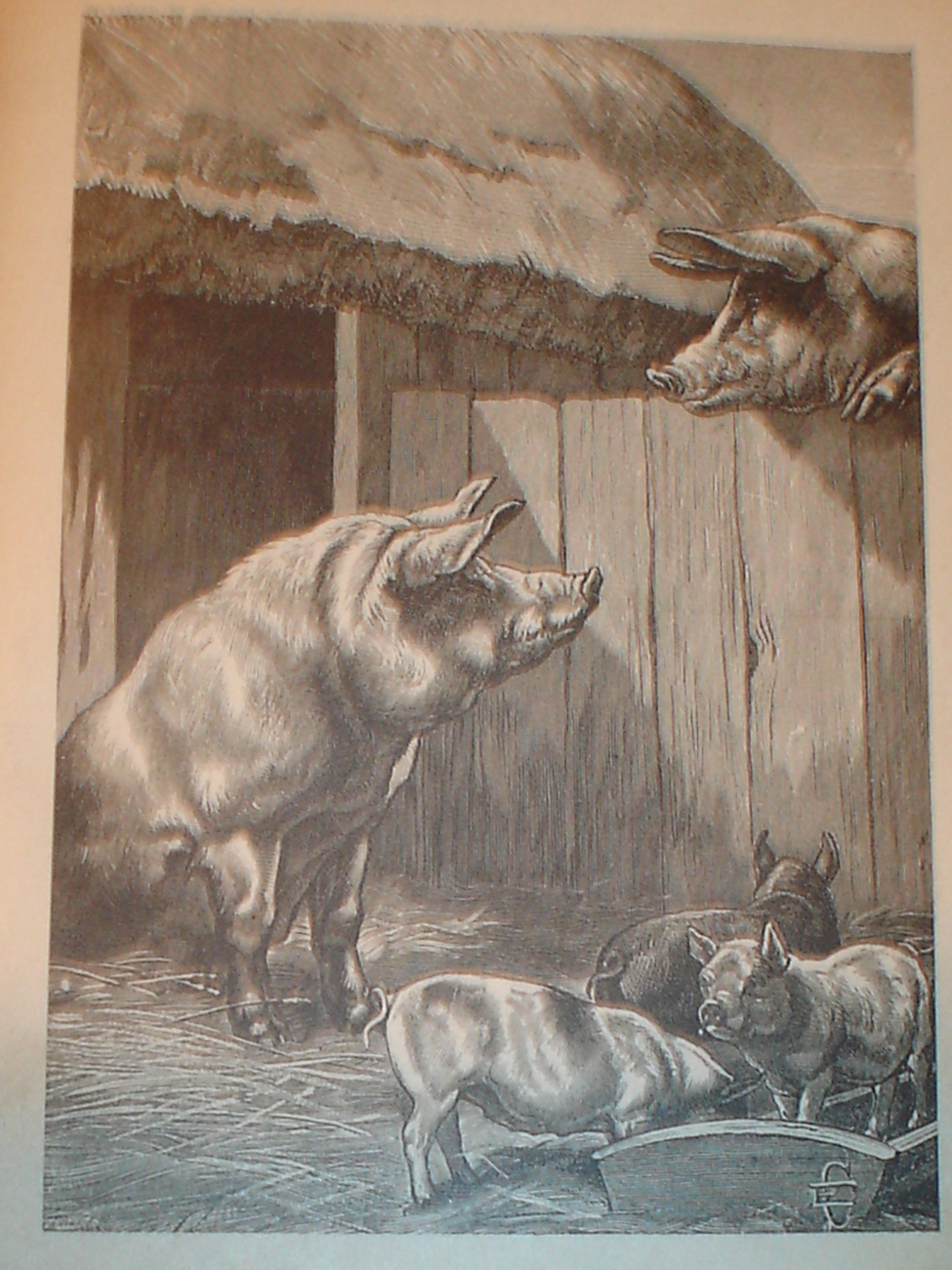 Best one yet! 1899 Print of Pigs in The Barnyard