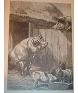 Best one yet! 1899 Print of Pigs in The Barnyard - $3.50