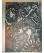 Origingal 1899 Print of Lemurs - $3.50