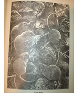 Originial 1899 Print of Mouse Party  - $13.50
