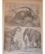 1899 Origingal Print of Elephants - $3.50