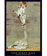 Baby Giraffe First Kiss Poster  - $5.90