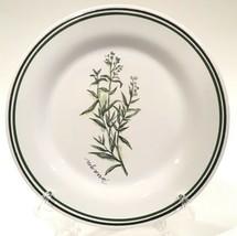 "Williams Sonoma 'Tarragon' Green & Black Banded Herb 8-1/2"" Salad Plate Portugal - $14.99"