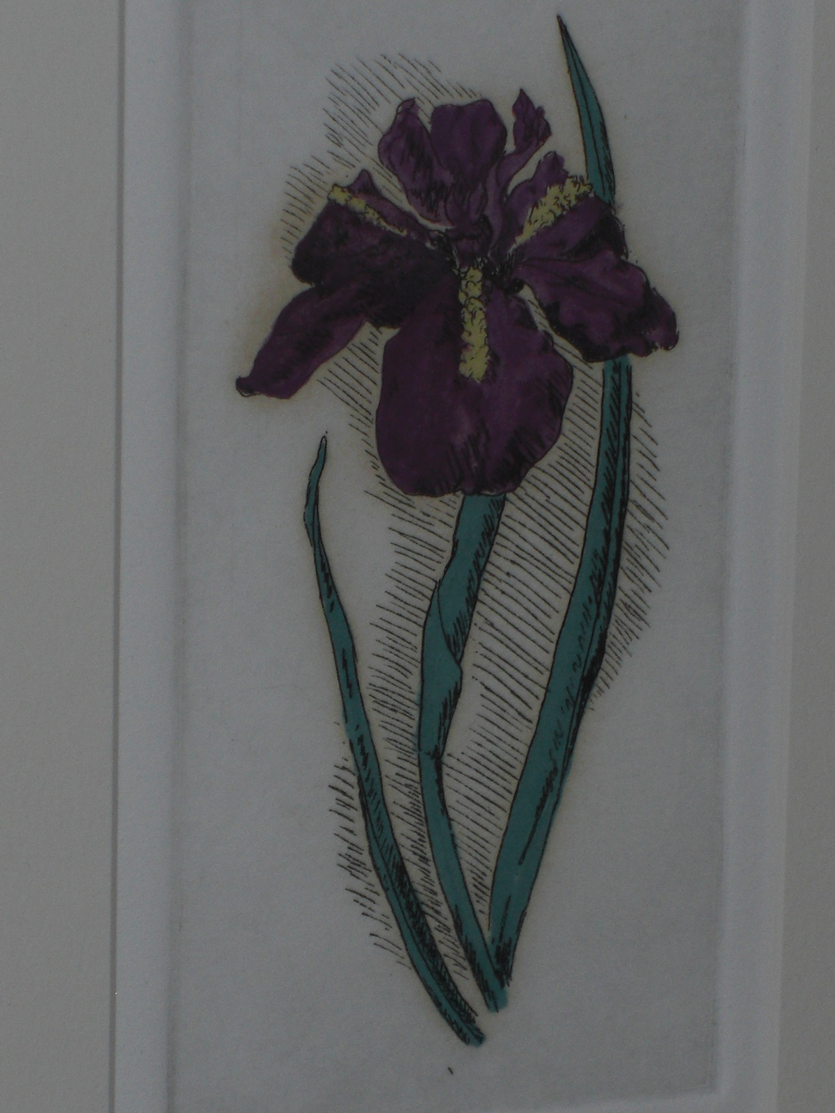 """IRIS"" Julianne B. Ricksecker  Hand Colored Etching Art"