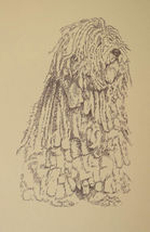Bergamasco Sheepdog Art #34 DRAWING FROM WORDS Kline adds your dogs name free. - $49.95