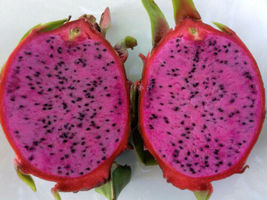 "Dark Star, Dark Purple/Red Flesh Dragon Fruit 2 new Cuttings 8"" - 12"" Green - $30.24"