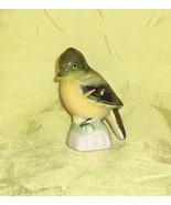 Yellow Bellied Fly Catcher  Canadian Tenderleaf Tea Premium  Bird Number 23 - $13.50