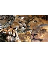 Big Cats Fridge Magnet - $3.95