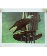 Chester Fields Print Eagle 20in x 24in Signed 1... - $181.45