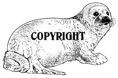 BABY SEAL new mounted rubber stamp NEW RELEASE!