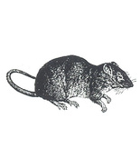 Unmounted Rubber Stamp: Rat - $2.75