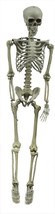 Hanging Lifesize Posable Halloween Skeleton Prop - $69.99