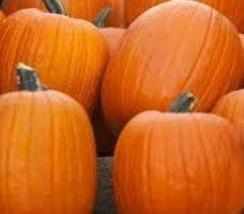 Jack O Lantern Pumpkin Seeds- 30 Seeds - €6,87 EUR