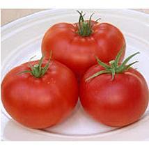 Champion II Tomato Seeds (25 Seed Packet) (More Heirloom, Organic, Non GMO, Vege - $2.73