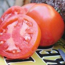 1/8 Gram Seeds of Oregon Spring Tomato Conventional & Organic - $22.67