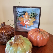 """Fall Decor Plaque, live air plants, Wooden shadow box, autumn leaf """"Happy Fall"""" image 3"""