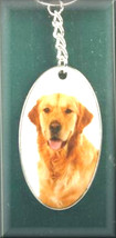 golden retriever breed of dog ceramic encased in metal , keyring