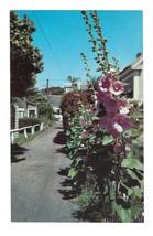 Hollyhock Ln Provincetown Massachusetts Holly Hock Lane Vintage Postcard - $4.99