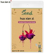 20 Pcs Double Petals Fuchsia Seeds, HZ Decorative Flower Plant - $7.13