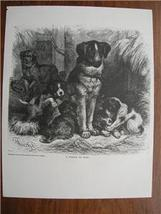 FAMILY OF DOGS Engraved WOODCUT Print SPECHT - $6.00