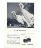 1944 Ansco Films & Cameras pelicans photo print ad - $10.00