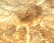 Round alpaca fur carpet from Peru, Rose Design, 100 cm diameter