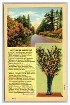 VINTAGE Curteich Linen Postcard - Oregon Coast Scotch Broom Golden Trail... - $8.88