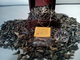 ☆<50 PC. FOSSILIZED SHARK Teeth> MINT Zodiac COIN& Retro EAGLE Necklace FA - $15.73